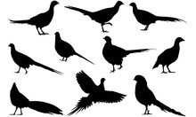 Pheasant Silhouette Vector Graphics