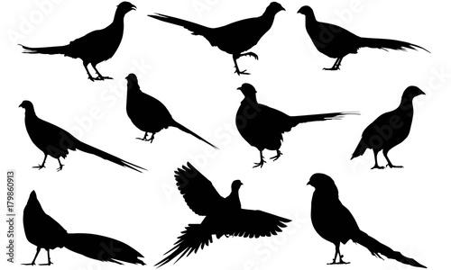 Obraz na plátně Pheasant Silhouette Vector Graphics