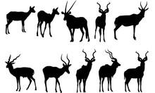 Antelope Silhouette Vector Gra...