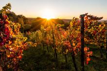 Sonnenstrahlen Und Weinlaub