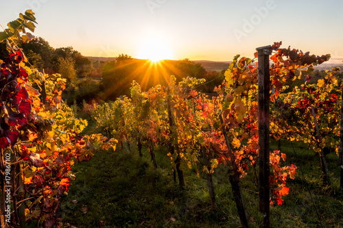 Fotografía  Sonnenstrahlen und Weinlaub