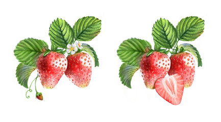FototapetaWatercolor illustrations with different berries isolated on the white background: strawberries, flowers and leaves