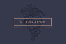 """Logo Template For Design Of Wine Card, Booklet, Menu For Restaurant Or Bar With Inscription """"Wine Collection: Best Red And White Wines"""". Bunch Of Grapes On Dark Blue Background. Vector Illustration."""