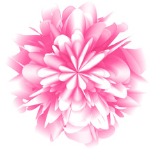 Abstract Futuristic Background, Fantastic Pink Chrysanthemum Flower With Lots Of Rose Petals