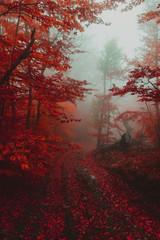 Fototapeta Optyczne powiększenie Path in the autumn golden forest