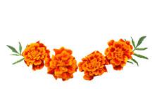 Orange Marigold Flower, Tagete...