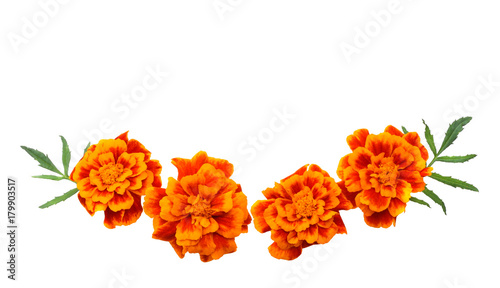 Foto op Canvas Madeliefjes Orange Marigold flower, Tagetes erecta, Mexican marigold, Aztec marigold, African marigold isolated on white background