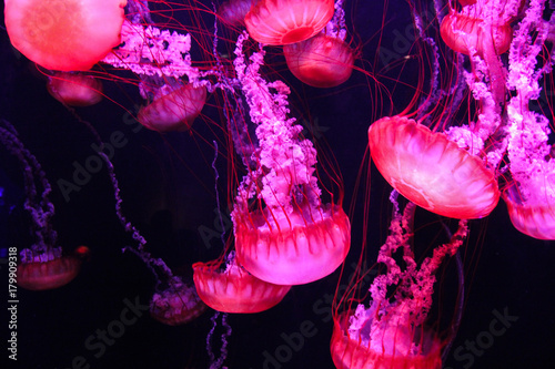 Photo Glowing purple and pink jellyfish