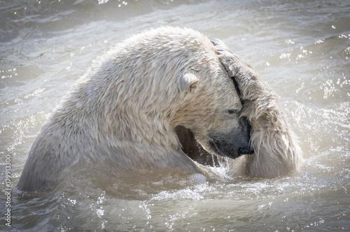 Deurstickers Luipaard Polar bear