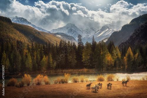 Foto auf Gartenposter Gebirge Beautiful landscape of early autumn forest and snowy mountain peaks