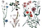 Illustrations of plants. - 179932337