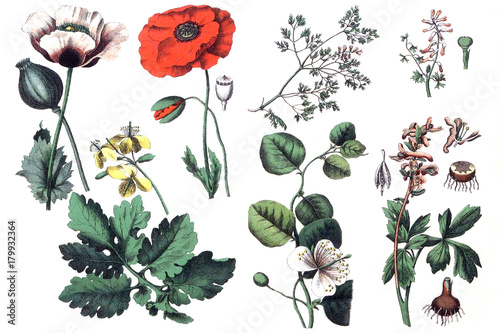 Illustrations of plants. - 179932364