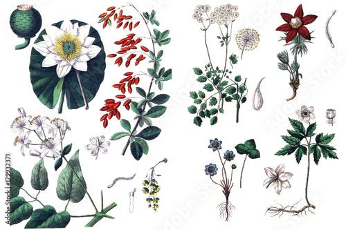 Foto  Illustrations of plants.