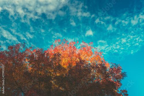 Keuken foto achterwand Turkoois autumn landscape on the park. autumn background
