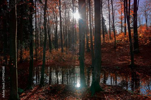 jesień w rezerwacie buków