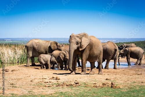 rodzina-sloni