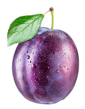 Plum With Water Drops. File Co...