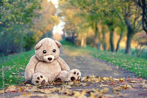 Fotografie, Obraz  big brown teddy bear in autumn park