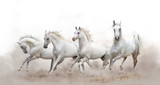 Fototapeta Horses - beautiful white arabian horses running over a white background