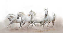 Beautiful White Arabian Horses...