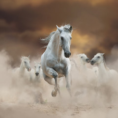 Fototapeta Koń Beautiful white andalusian stallion with herd on freedom