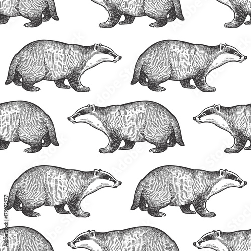 Fotografía Seamless pattern with badger.
