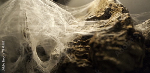 Spiderweb on halloween