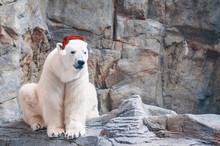 White Polar Bear Wearing Santa...