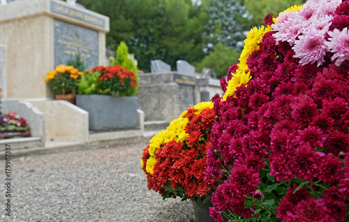 Photo Stands Cemetery Fleurs Chrysanthème pomponettes