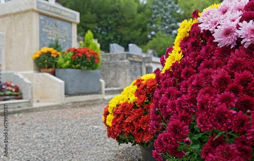 Wall Murals Cemetery Fleurs Chrysanthème pomponettes