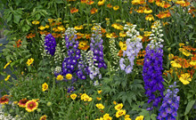 Colourful Flower Border With M...