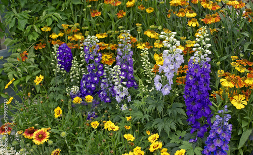 Cuadros en Lienzo Colourful flower border with mixed planting including Delphiniums Magic fountain