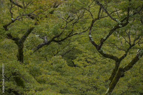 Nice Shape Of Maple Trees Buy This Stock Photo And Explore