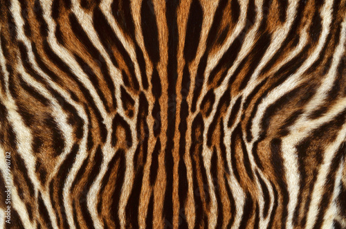 feline fur texture background