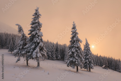Dramatic wintry scene with snowy trees.