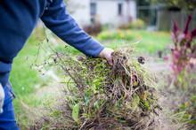 Man Hands Clearing His Garden ...