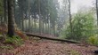 Misty Forest in West Germany, Bielefeld