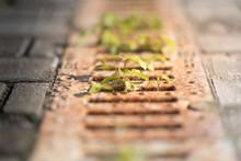 Waterway And Road - Grass. Aqu...