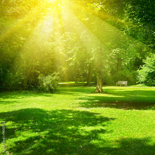 Papiers peints Morning Glory Bright sunny day in park. The sun rays illuminate green grass