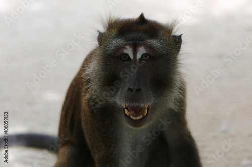 Photo  Monkey at the seaside