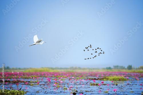 Fotomural flock of flying birds