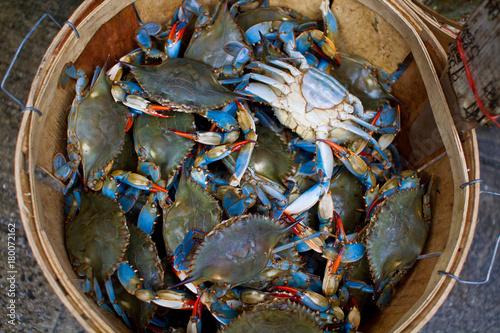 Photo crabs