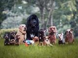 Wiele różnych ras psów na trawie