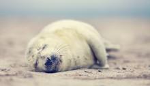 Robben Am Strand, Wildlife