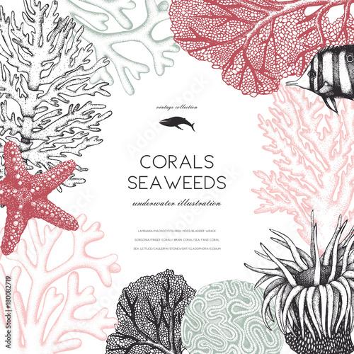 Fototapeta premium Rama wektor z ręcznie rysowane morskie korale, ryby, gwiazdy szkicu. Tło z podwodnymi elementami naturalnymi. Dekoracyjna ilustracja Sealife na białym tle. Projekt ślubu.