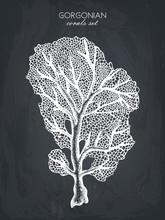 Vector Illustration Of Hand Drawn Reef Coral. Vintage Set Underwater Natural Elements. Vintage Sealife Sketch On Chalkboard
