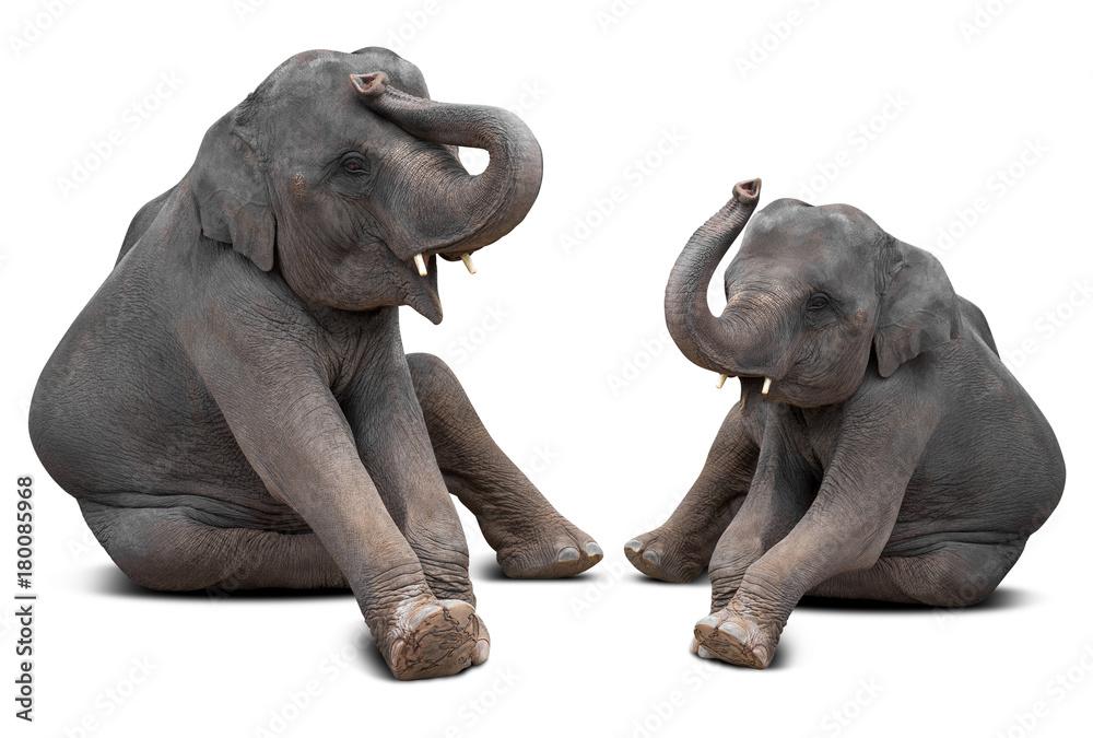 Baby elephant isolated