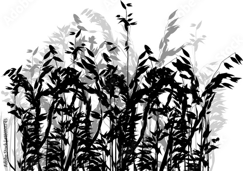 Fototapeten Künstlich grey and black silhouettes of isolated oat