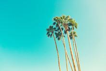 Retro California Palms