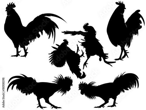 Fototapeta rooster chicken silhouette set